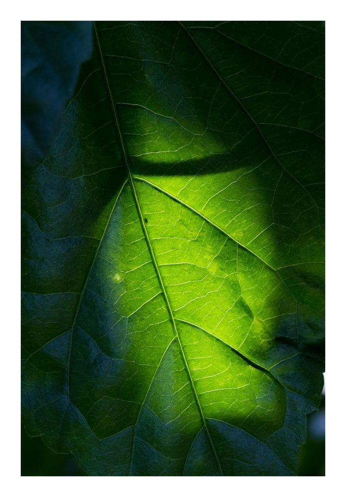 Shadow on leaves-5