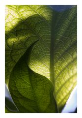 Shadow on leaves-6