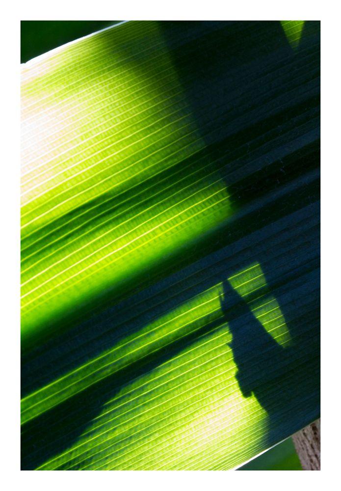 Shadow on leaves-7