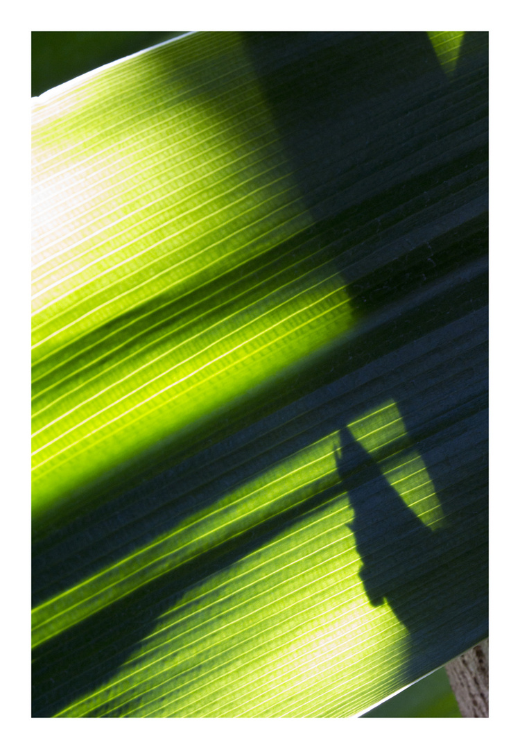 Shadow on leaves-7