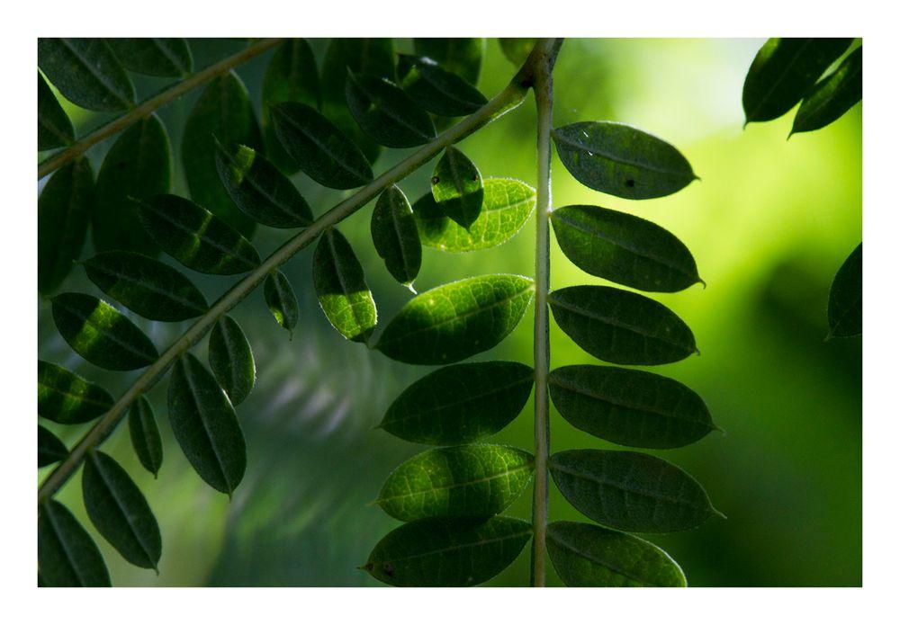 Shadow on leaves-8