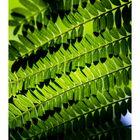 Shadow on leaves-9