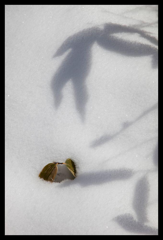 Shadow on snow-3