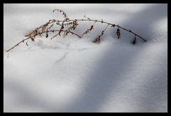 Shadow on snow-4