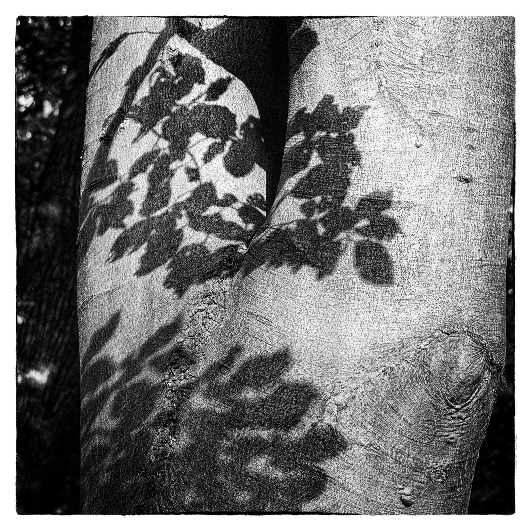 shadow touch ....