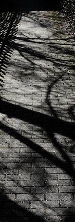 Shadow traces escape