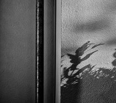 shadow.play