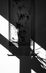shadows crossing
