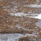 Shalders at Gulberwick beach