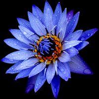 shaman_healing