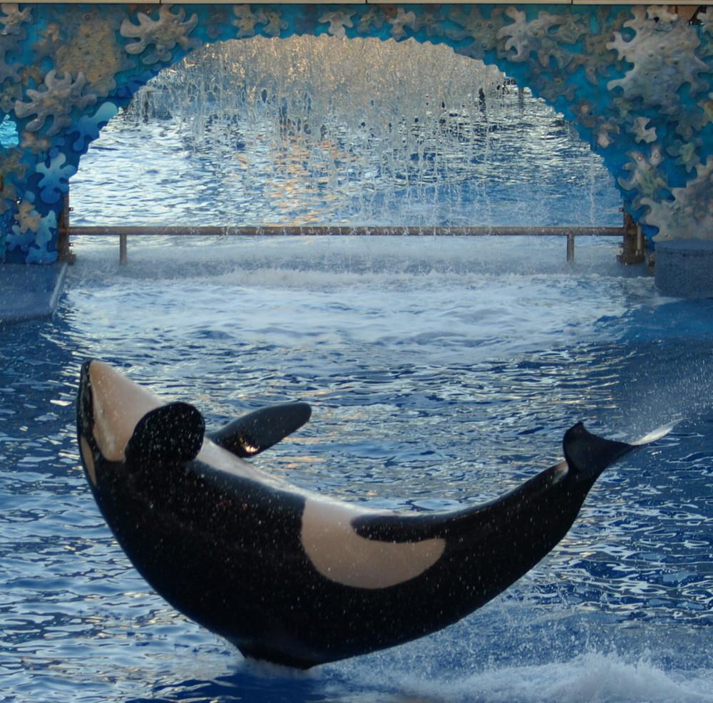 Shamu at Sea World Florida