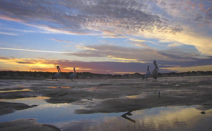 SHARK BAY, Australia - Sunset -