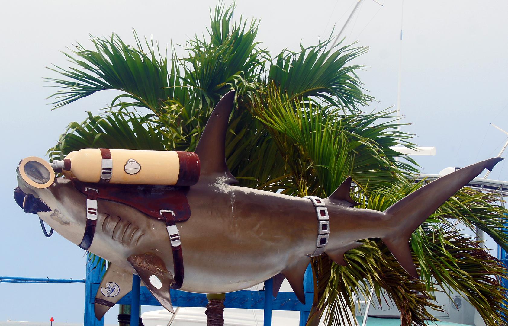 Sharkdiver