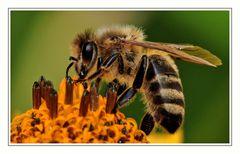 She works hard for the honey