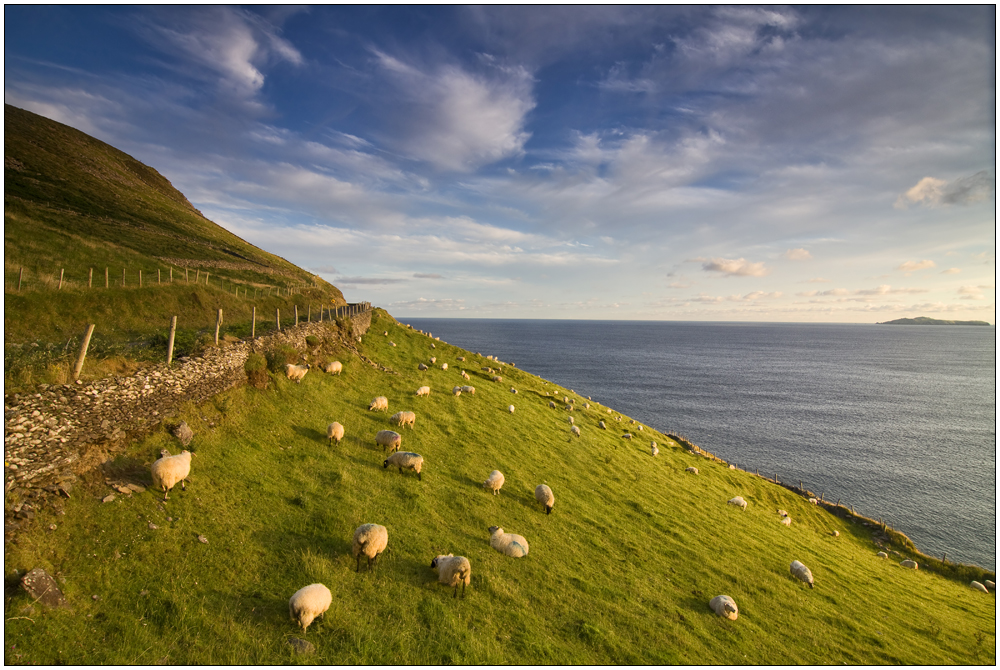 Sheep on Slea Head