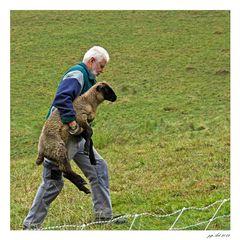 Sheep to go...