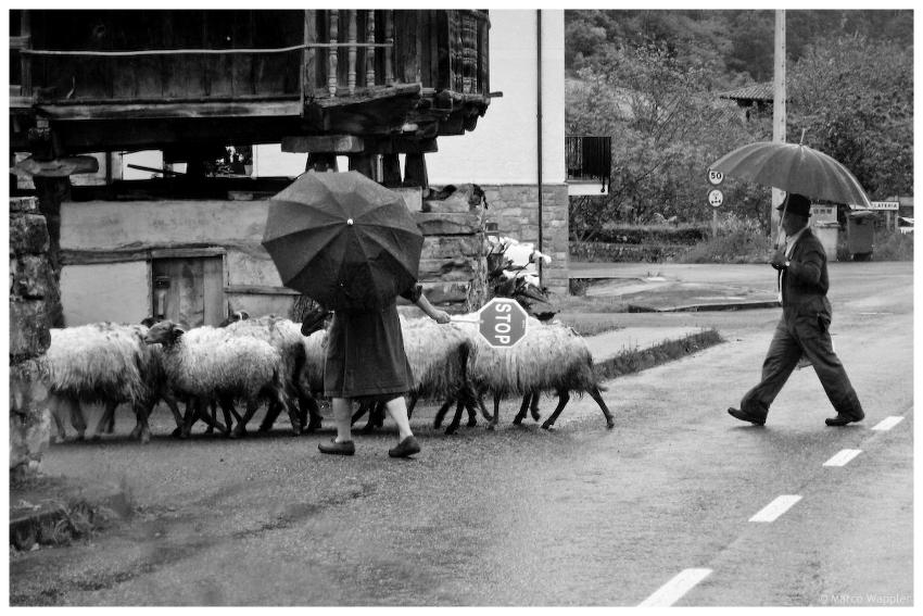 Sheep Xing