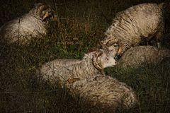 Sheepworld...ohne dich ist alles doof...;)