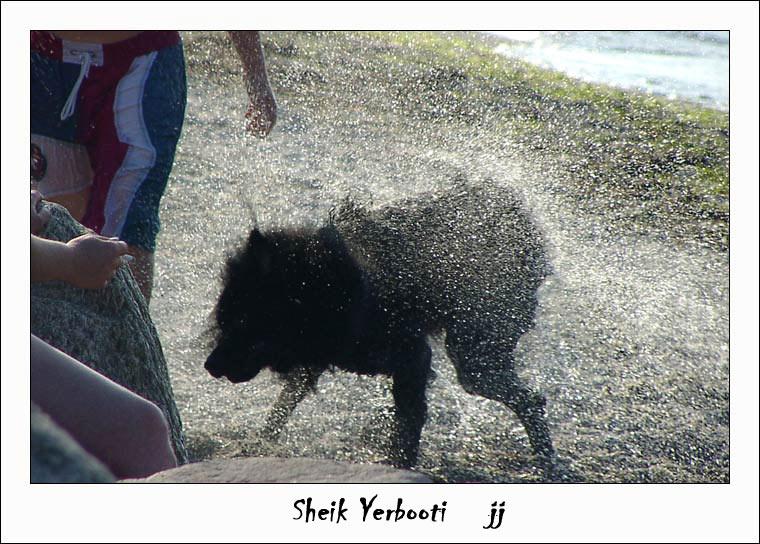 Sheik Yerbooti