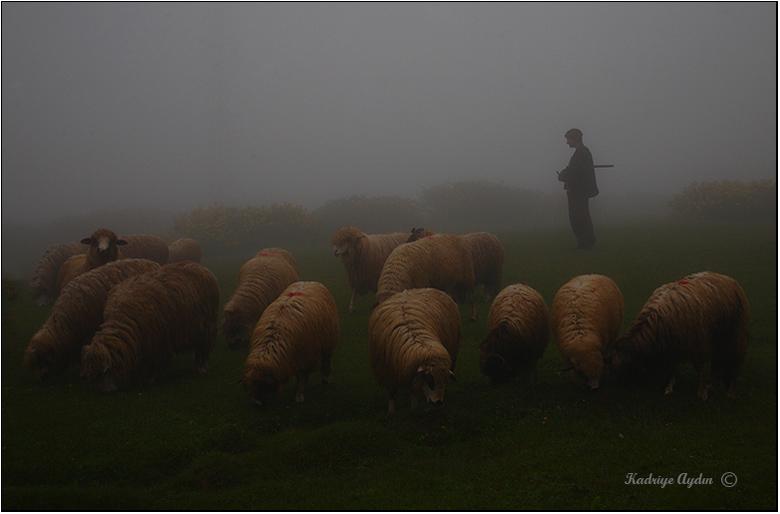Shepherd and the flock