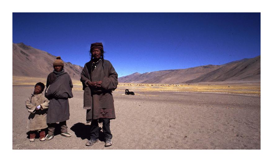 Shepherd at 5000 m, Ladakh India
