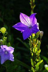 shining Blue