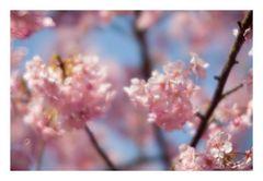 Shining pink -2