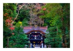 Shinto shrine surrounded by forest