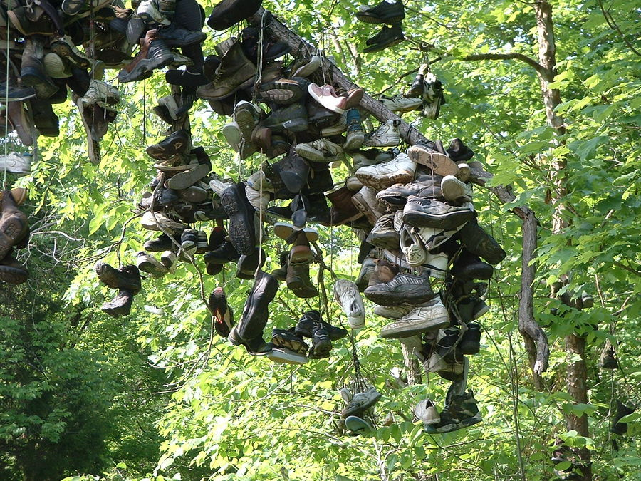 Shoe Tree (KY - USA)