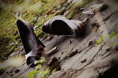 shoes'n bolt