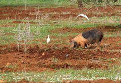 Shonende Bodenbearbeitung