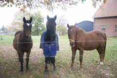 Shooting mit Pferden....
