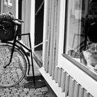shop window dog