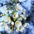 Show me the springtime...