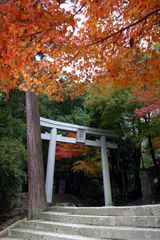 Shrine gate in fall