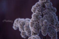 shrub #2
