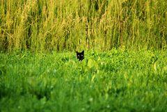 Shy cat....