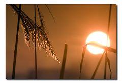 Shy sun