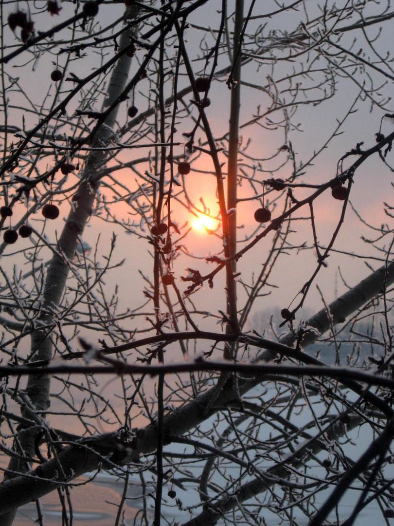 Siberian winter's day