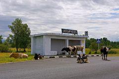 Sibirische Bushaltestelle