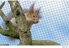 Sibirisches Eichhörnchen...