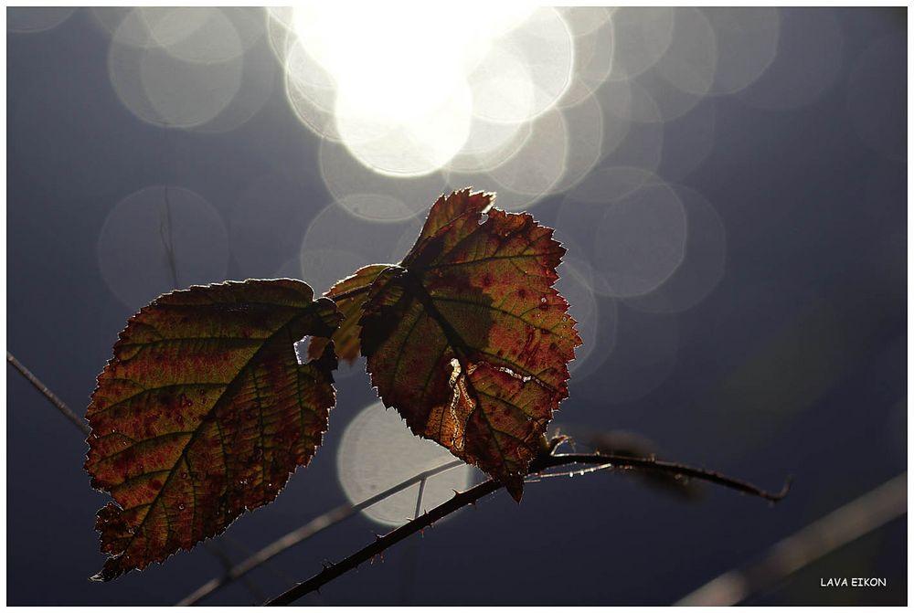 Sich es mal in der Herbstsonne ...