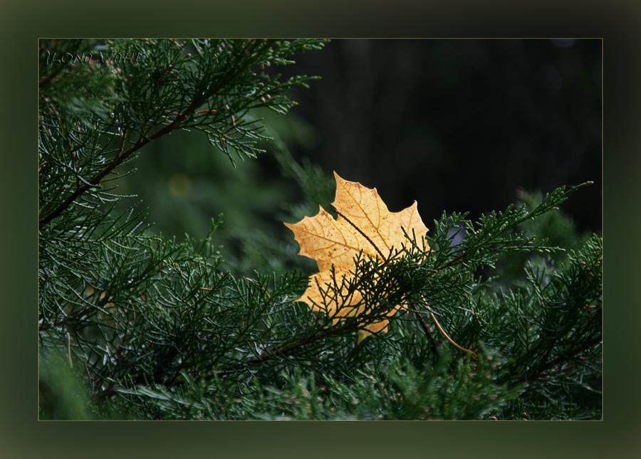 Sich mit fremden Blättern schmücken