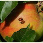 sich Nähe geben - auch im goldenen Herbst...