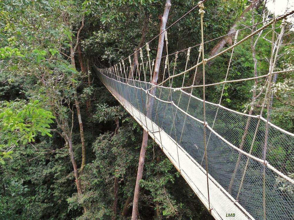 Sidewalk in the jungle