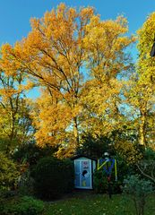 SIE + ER im Herbstwald