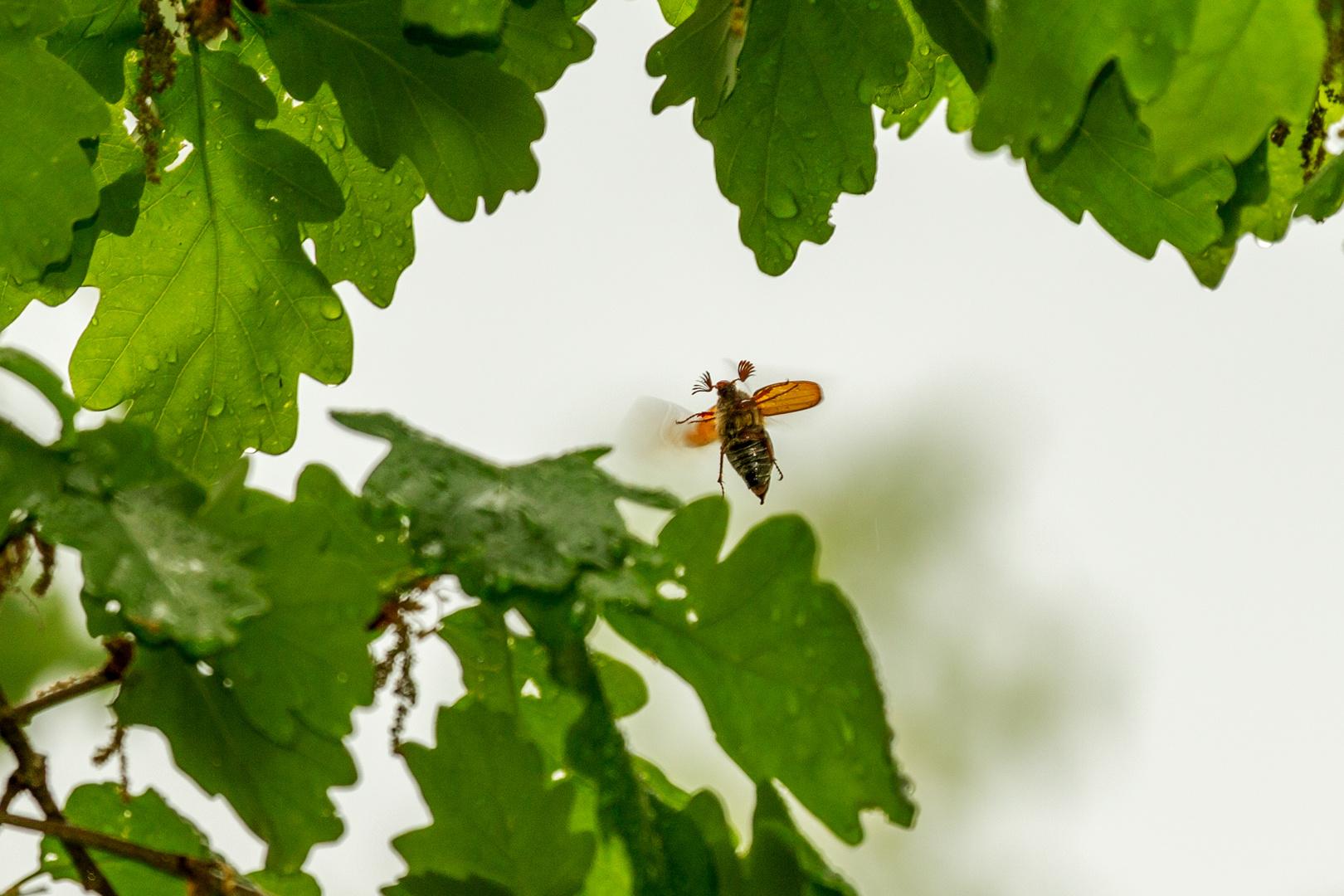 sie fliegen wieder foto bild regen natur insekt bilder auf fotocommunity. Black Bedroom Furniture Sets. Home Design Ideas