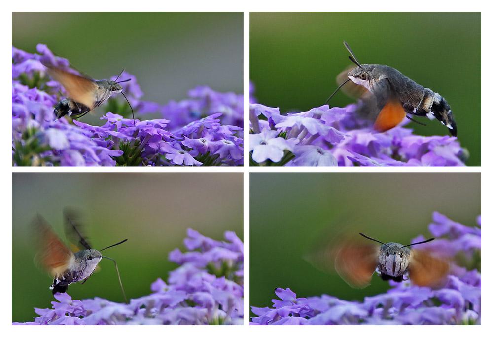 sie fliegen wieder !!!