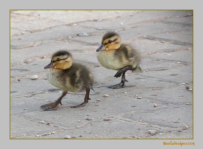 Sie marschierten gerade noch einmal......