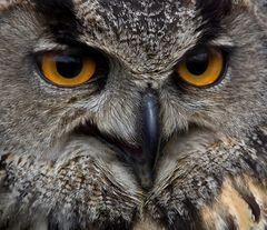 Sieh mir in die Augen ,Großer !
